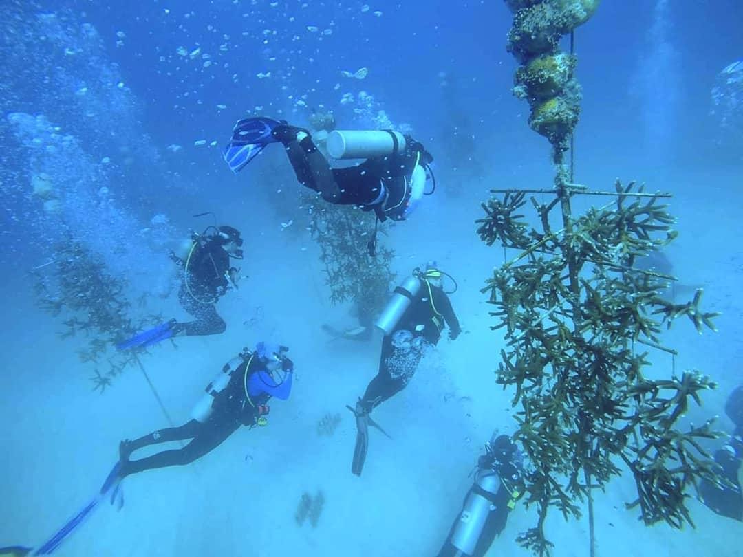 Padi Coral Restoration Distinctive Specialty Dive Program
