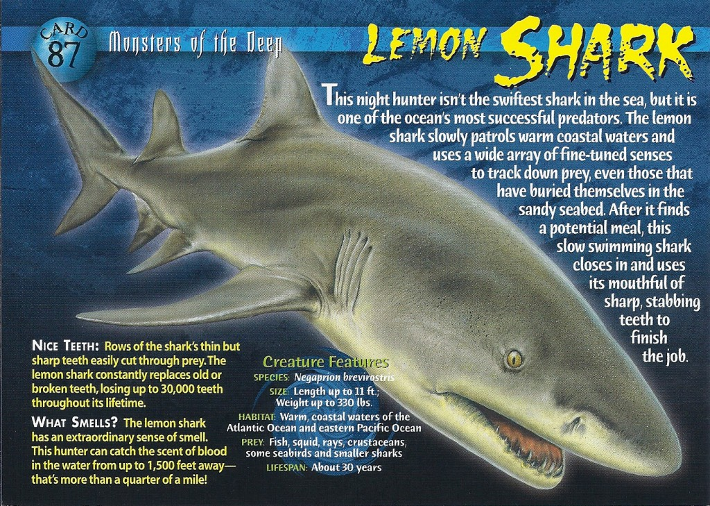 Lemon_Shark_Jupiter_Dive_Center-1024x729.jpg
