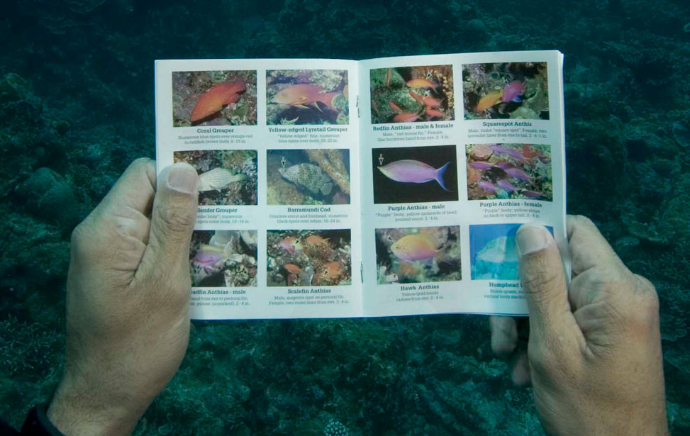 fish-identification.jpg
