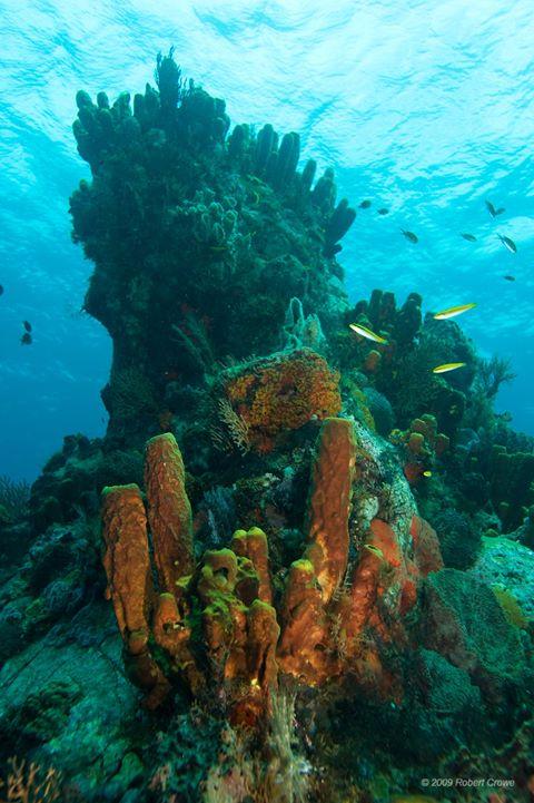 Reefs Dominica